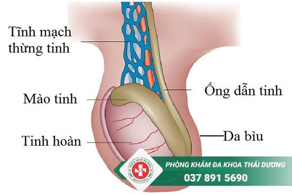 đia chỉ chữa trị bệnh giãn tĩnh mạch thừng tinh ở Biên Hòa - Đồng Nai 1